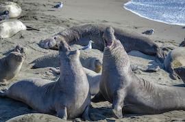 Seal Beach retirement communities