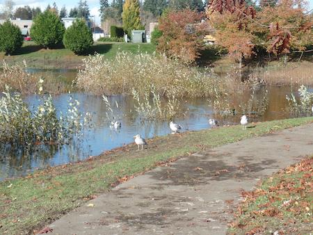 Lacey retirement communities